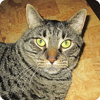 Adopt A Pet :: Maximus - Norwich, NY