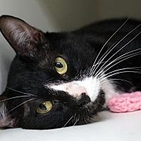 Adopt A Pet :: Mishu - New City, NY