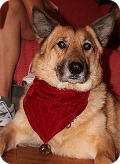 German Shepherd Dog Mix Dog for adoption in Baltimore, Maryland - Maxwell