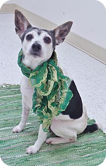 Terrier (Unknown Type, Medium) Mix Dog for adoption in Chambersburg, Pennsylvania - Sasha