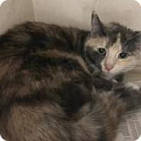 Adopt A Pet :: Jolene - North Haven, CT