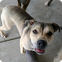 Adopt A Pet :: Dharma - Lisbon, OH
