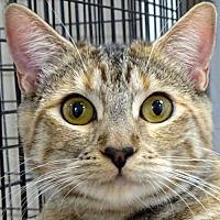 Adopt A Pet :: Tinker - Westlake Village, CA