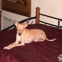 Adopt A Pet :: Largo aka BD - Tucson, AZ