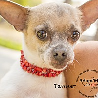 Adopt A Pet :: TANNER - Inland Empire, CA