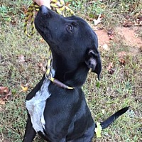 Adopt A Pet :: Zeke - Hamilton, GA
