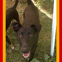 Adopt A Pet :: LAYLA - Sebec, ME