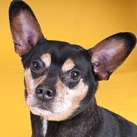Adopt A Pet :: Manny - Chicago, IL