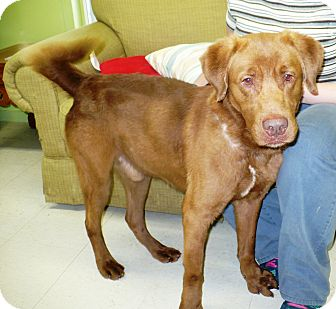 Retriever (Unknown Type) Mix Dog for adoption in Eastpoint, Florida - Red