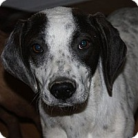 Adopt A Pet :: Fiona - in Maine - kennebunkport, ME