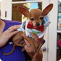 Adopt A Pet :: Colby - Encinitas, CA