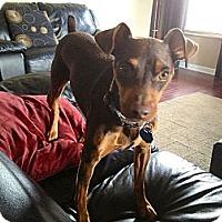 Adopt A Pet :: Sadler - Nashville, TN