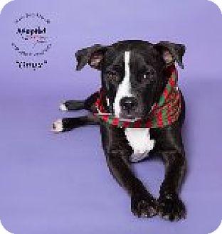 Labrador Retriever Mix Dog for adoption in Houston, Texas - Onix