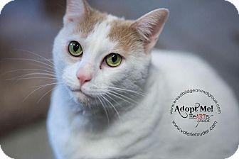 Domestic Shorthair Cat for adoption in Sewaren, New Jersey - Fluffy