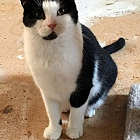 Adopt A Pet :: Benny and Joon - St. Paul, MN
