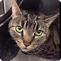 Adopt A Pet :: Chloe K - Trenton, NJ