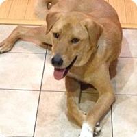 Adopt A Pet :: Pluto - Chantilly, VA