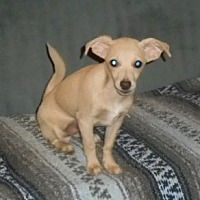 Adopt A Pet :: Dusty - Yucaipa, CA