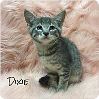 Adopt A Pet :: Dixie - Jasper, IN