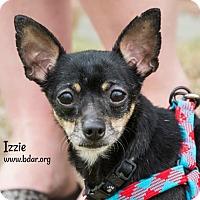 Adopt A Pet :: Izzie - Cheyenne, WY