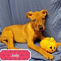 Adopt A Pet :: Jody - Ahoskie, NC