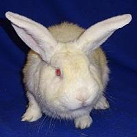 Adopt A Pet :: Alvin - Woburn, MA