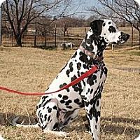 Adopt A Pet :: Molly - Newcastle, OK