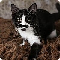 Adopt A Pet :: Marxy - Eagan, MN