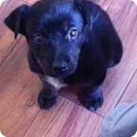 Adopt A Pet :: Bailey - Westbank, BC