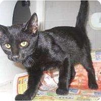 Adopt A Pet :: Starlette - Mobile, AL