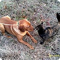 Adopt A Pet :: Josey - Dundas, VA