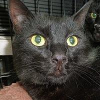 Adopt A Pet :: Acorn - Carmel, NY