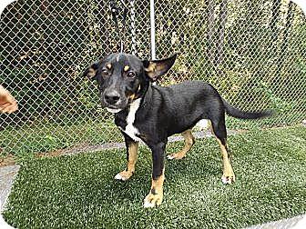 German Shepherd Dog Mix Dog for adoption in Laingsburg, Michigan - Ethan