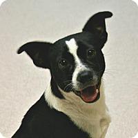 Adopt A Pet :: Sunshine - Lufkin, TX