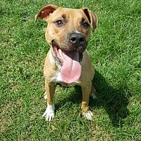 Adopt A Pet :: Zane - Lake Charles, LA
