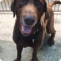 Adopt A Pet :: Zeus Guy - Torrance, CA