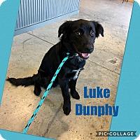 Adopt A Pet :: Luke Dunphy - Jersey City, NJ