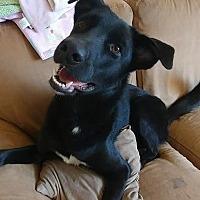 Adopt A Pet :: Marley - River Falls, WI