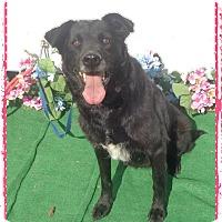 Adopt A Pet :: JAZZY see also BANKS - Marietta, GA