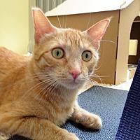 Adopt A Pet :: Georgie - Arlington/Ft Worth, TX