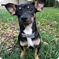 Adopt A Pet :: Billy - West Hartford, CT