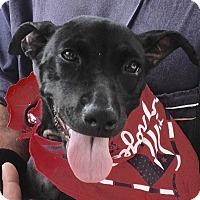 Adopt A Pet :: Leticia - Madison, NJ