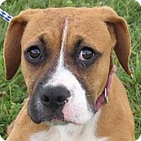 Adopt A Pet :: Gidget - Germantown, MD