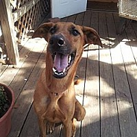 Adopt A Pet :: Gracie - Fair Oaks Ranch, TX
