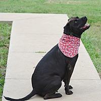 Adopt A Pet :: LADY - Poteau, OK