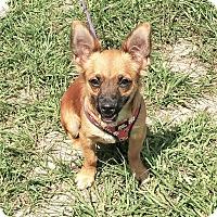Adopt A Pet :: Rudy - Tavares, FL