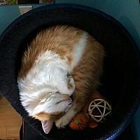 Adopt A Pet :: NJ - Louie (CP) - Charleston, WV