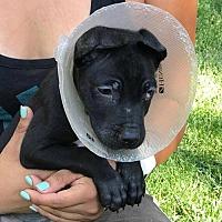 Adopt A Pet :: Finn - Dana Point, CA