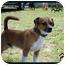 Photo 1 - Beagle Mix Dog for adoption in Windham, New Hampshire - Balto