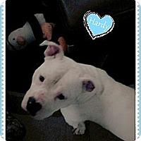 Adopt A Pet :: Hardy - Hartsville, TN